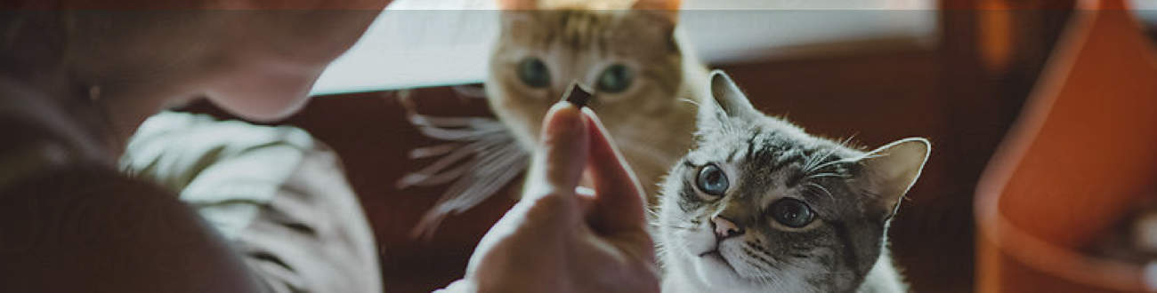Enroll Your Pet in a Pet Insurance Protection Plan to get Them the Care They Deserve