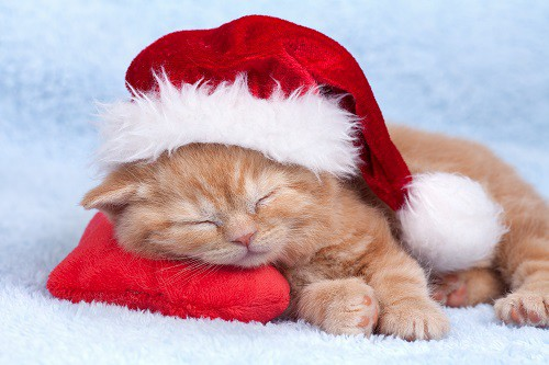 Marlboro Pet Grooming Tips for Holiday Photos!