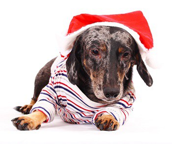 Harmful Holiday Foods To Your Pets
