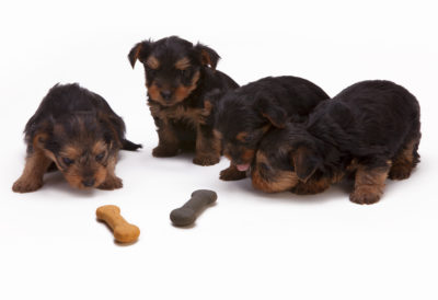 February 28th Marks the 23rd Annual World Spay Day