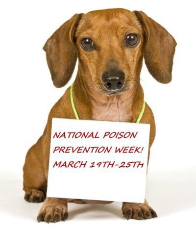 Protect Your Pets at Home: Poison Prevention Week March 19-25, 2017
