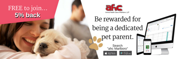 Veterinary Reward And Loyalty Program