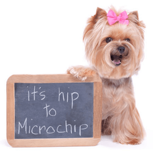 Pet Microchips: Get Your Dog and Cat Microchipped