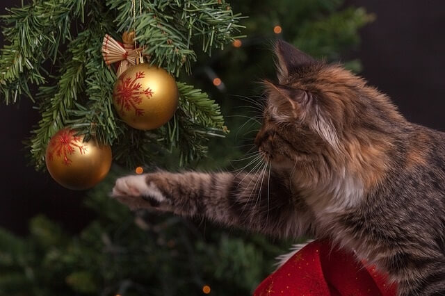 Holiday Safety For Cats