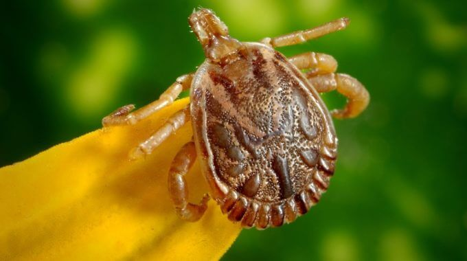 NJ Lyme Disease Update for Dogs and People