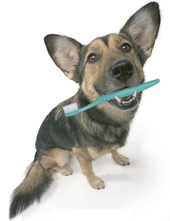 Animal Health Care of Marlboro and You: A Partnership for Your Pet's Life-Long Dental Health