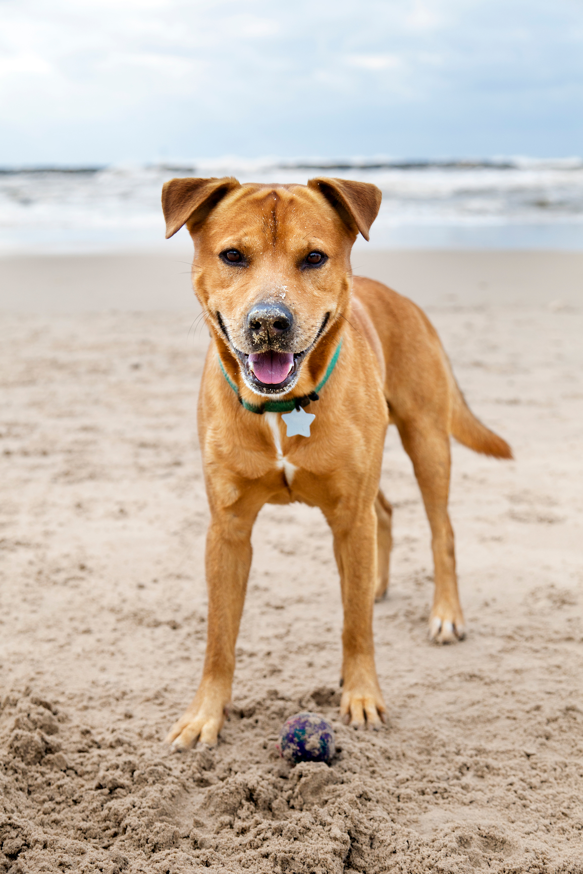 Everything Pet Owners Need to Know About Heatstroke